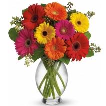 12 Assorted Gerberas in Vase
