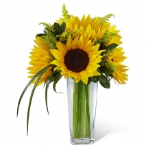 6 Pieces Long Stem Sunflowers in Vase