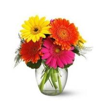 online gerbera flowers philippines